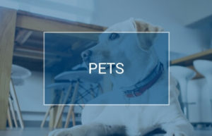 Pets | Waites Cash and Carry