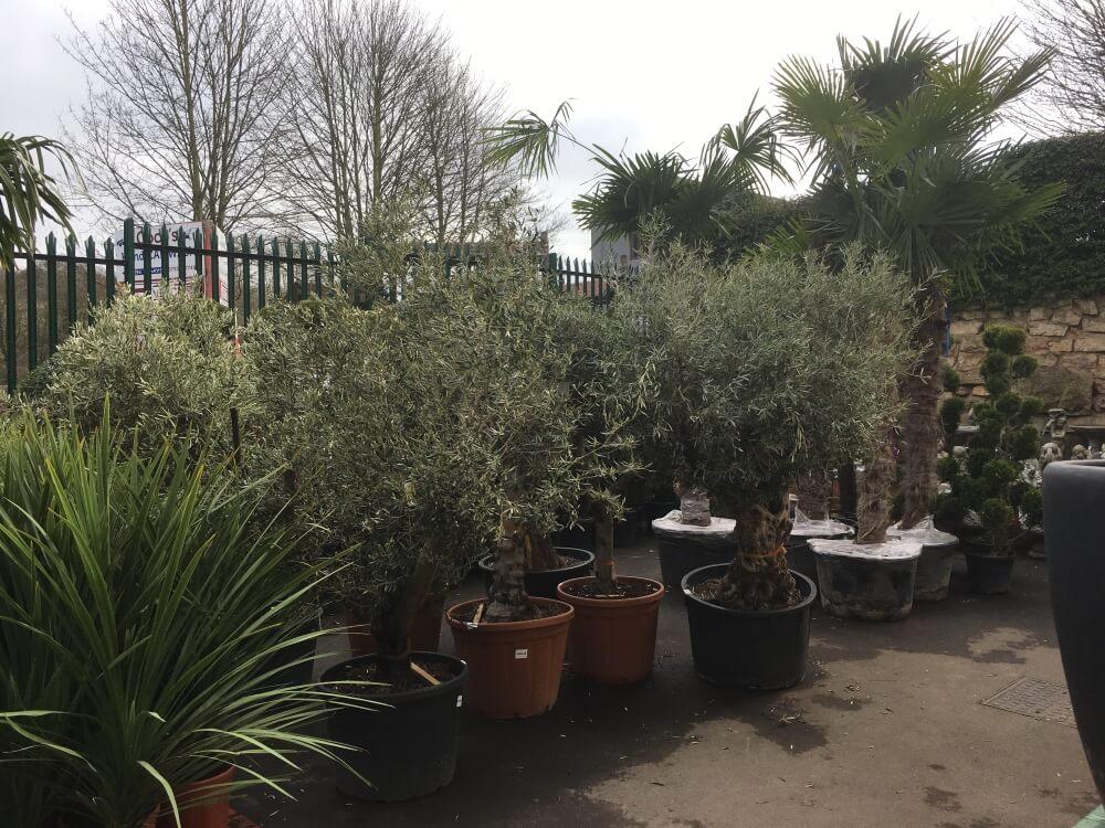 waites-discount-warehouse-gardening-4